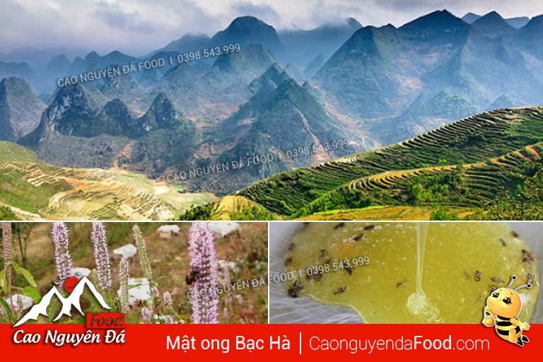 Mật ong bạc hà ở Hà Giang tốt nhất Cách phân biệt mật ong Bạc Hà Thật Giả