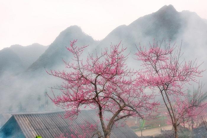 Khám Phá Du lịch Hà Giang, Tự túc đi ngắm cảnh vùng Hoa Tam Giác Mạch