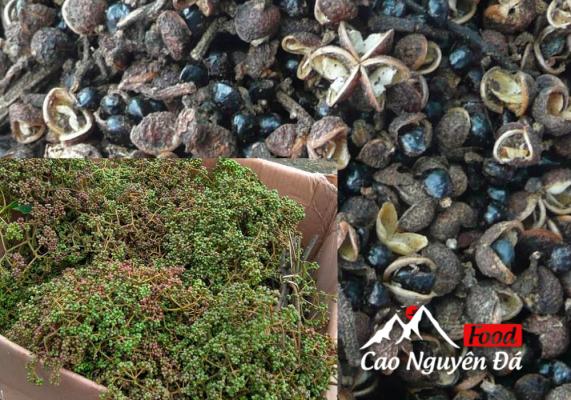 Hạt Dổi Mắc Khén gia vị Đặc trưng của núi rừng Tây Bắc
