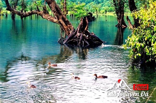 Hồ Noong - Chốn Bồng Lai tiên cảnh ở Hà Giang khiến du khách mê mẩn